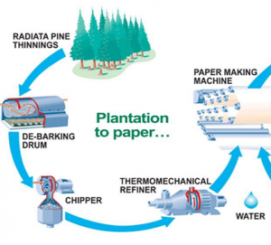 The process of plantation to paper