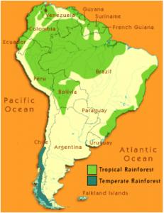 South American Rainforest